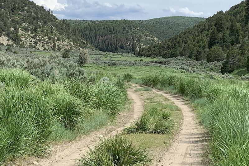 Shults Cow Camp Elk & Mule Deer Hunts