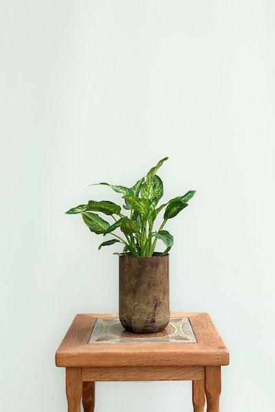 Lille grøn plante
